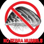 No Zebra Mussels