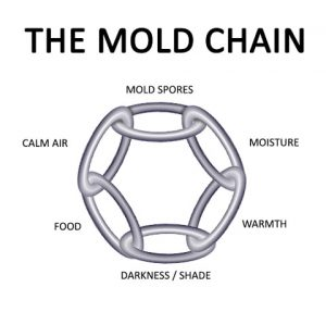 mold-chain-diagram